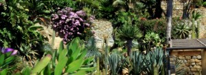 Tour naturalistico Muse della Riviera Ligure