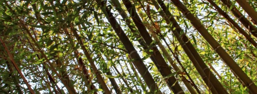 I giardini della Riviera: Tour naturalistico in Liguria e Costa Azzurra