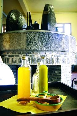 museo olio di oliva