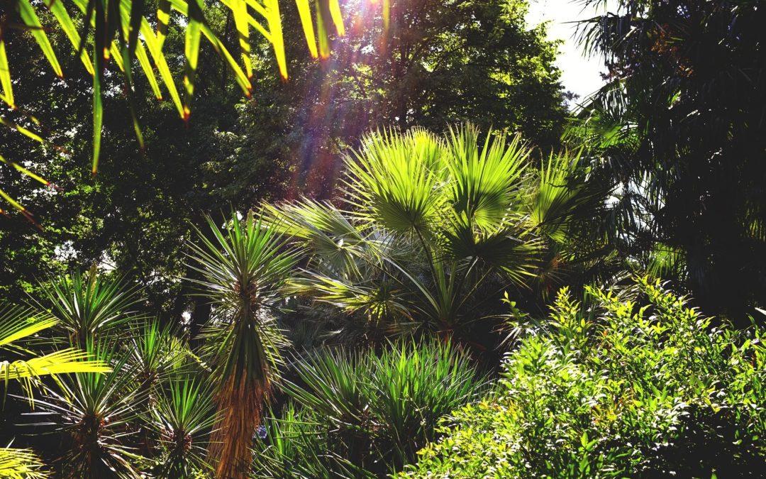 Native Flora and Botanical Gardens