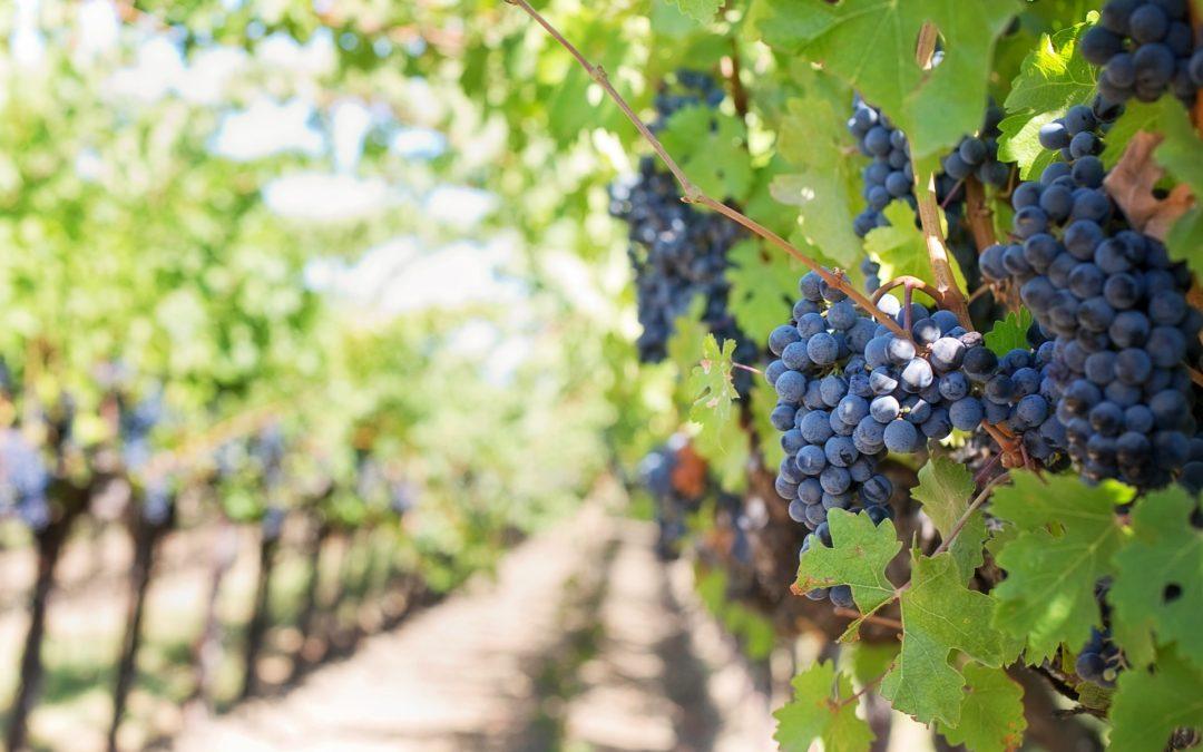 Escursioni: La Riviera del vino