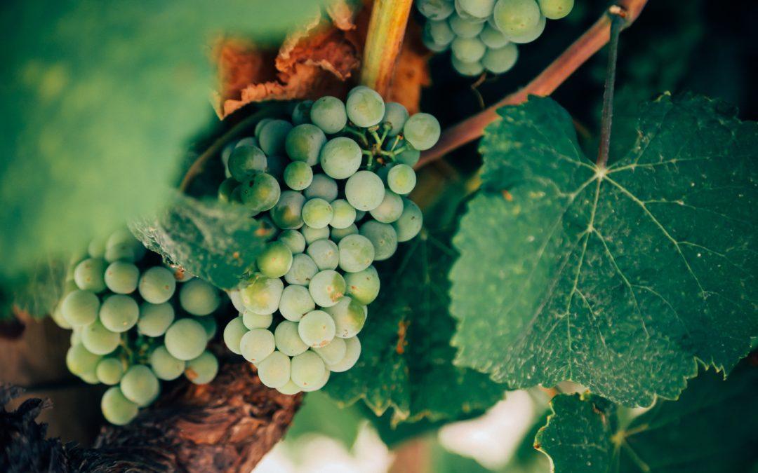 Athena and Dionysus: Food and Wine Tourism