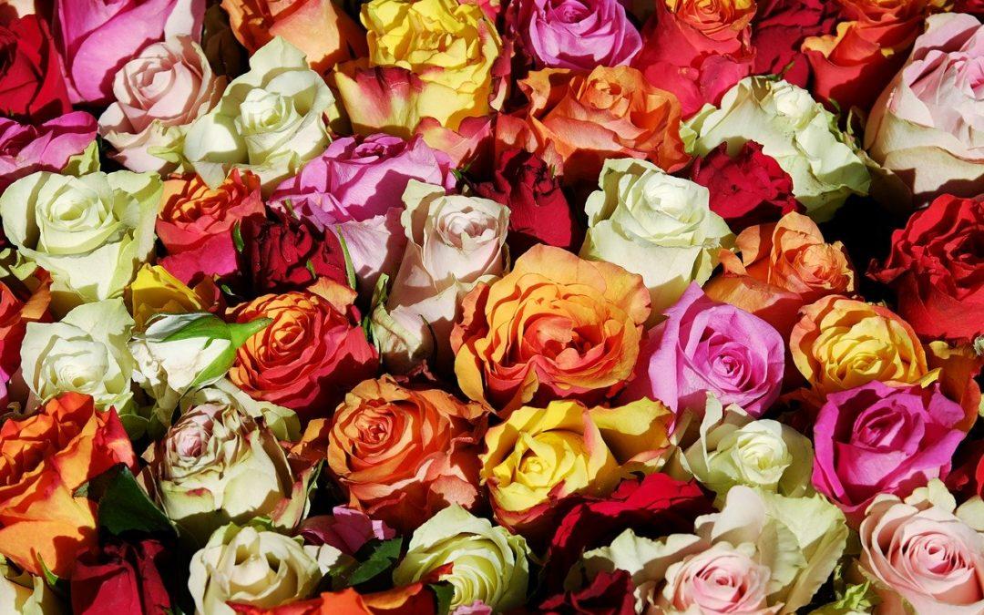 Flowers and Fragrances of Liguria